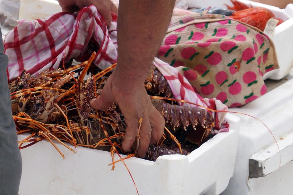 Il pescato (e mangiato) del giorno