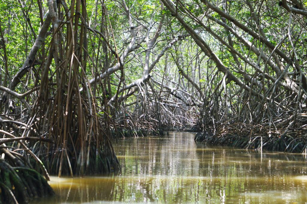 Le mangrovie del parco di Celestum